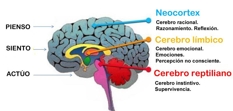 inteligencia-cerebro.jpg